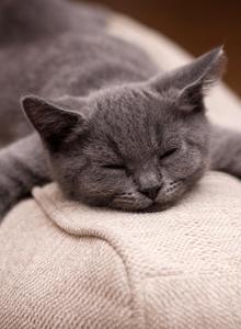 超级可爱萌宠猫咪睡姿图片