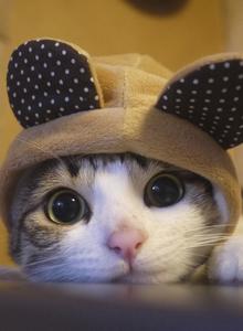 宠物小猫咪萌翻你系列 小猫咪也会卖萌啦